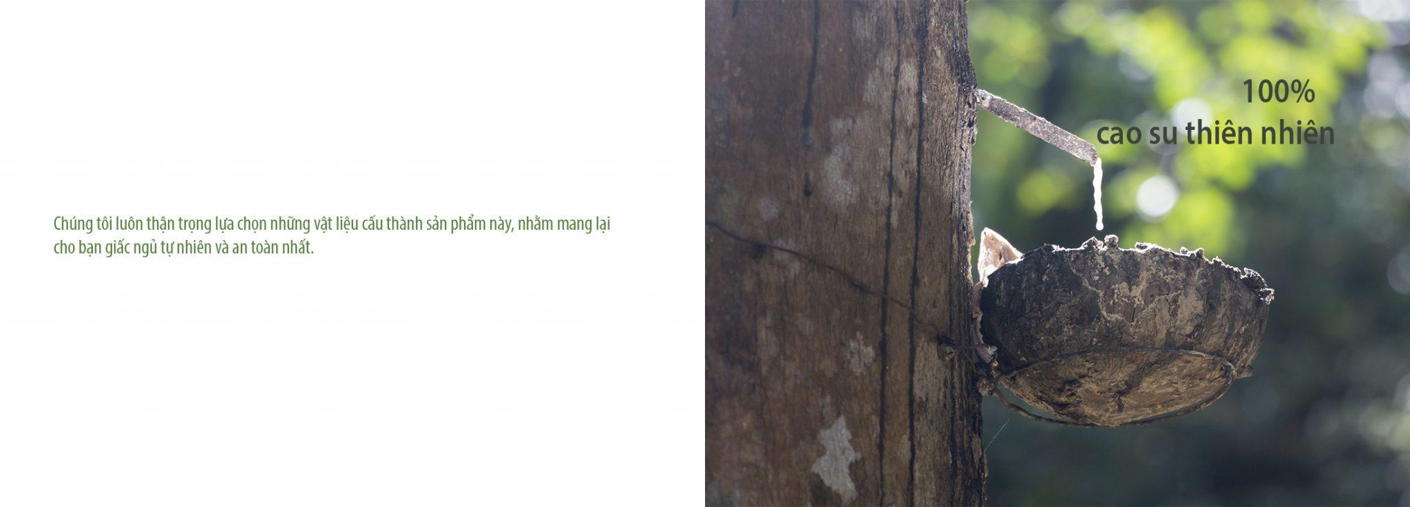 Nệm Lò Xo Túi Cao Su LACOIL - Vạn Thành nem lo xo lacoil van thanh 7 2048x737 1